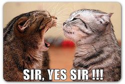 Cats_Sir_Yes_Sir